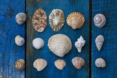 seashells Stock Photo - 10229987