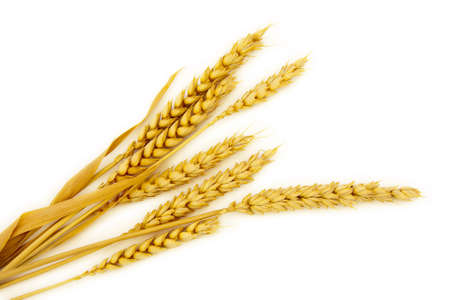espiga de trigo: Jefes de cereales aisladas sobre fondo blanco