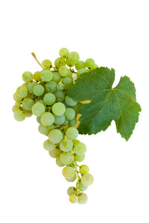 grapes in isolated: isolated cluster of grapes Stock Photo