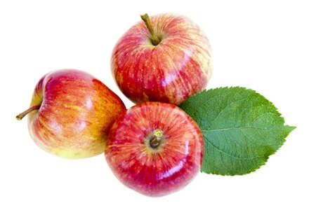 熟した赤いリンゴ葉を持つ