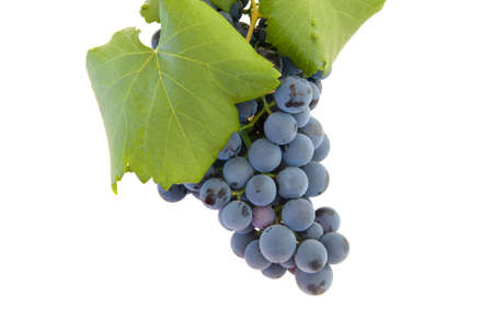 druiven op witte achtergrond Stockfoto