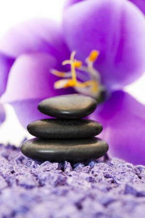 Stenen met paarse bloem Stockfoto - 10754281