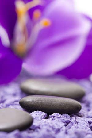 stenen met paarse bloem