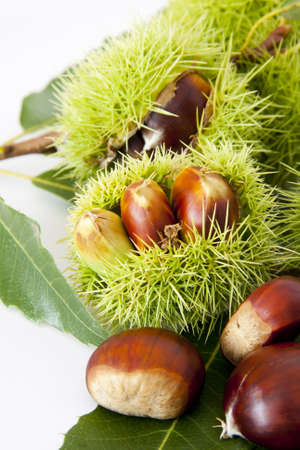 nuts, fruits of autumn Stock Photo - 10941658
