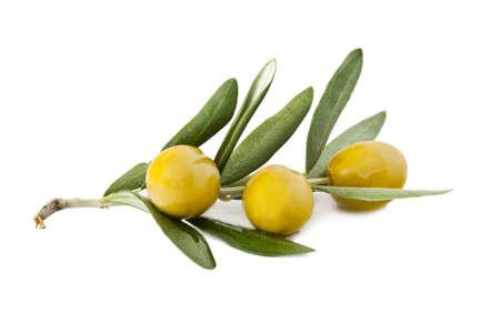 rama de olivo: aceitunas frescas en la rama de olivo sobre fondo blanco Foto de archivo