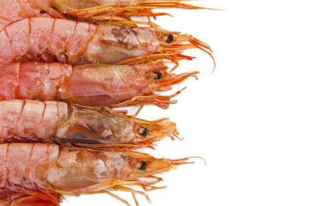 crustaceans: fresh seafood, shrimps and crustaceans