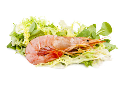 fresh seafood, shrimps and crustaceans Stock Photo - 11066058