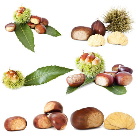 collection of nuts photo