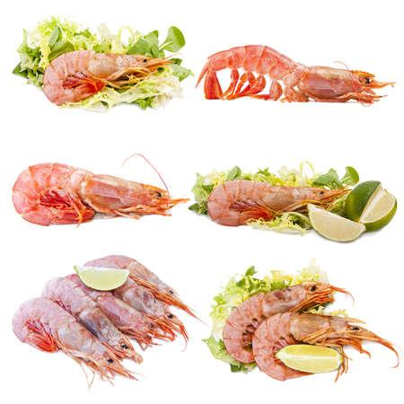 set of shellfish photo