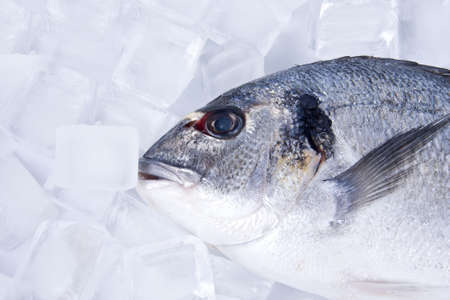 fresh raw fish with white background Stock Photo - 12597262