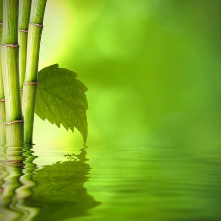 Achtergrond van natuurlijke spa met planten en reflectie in het water Stockfoto - 14777146