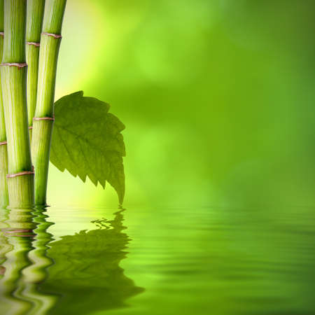 background of natural spa with plant and reflection in the water