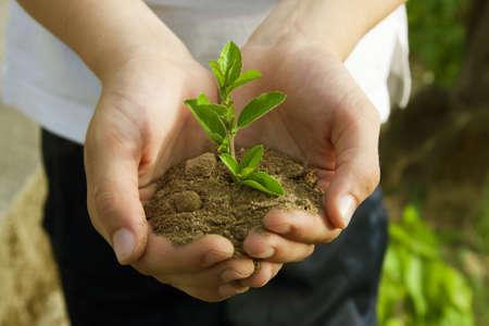 Garçon dans la plantation d'arbres, la conservation de l'environnement Banque d'images - 14777225