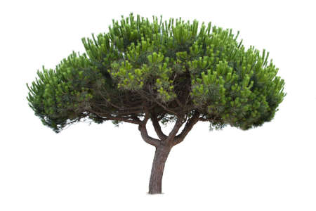 weelderige groene boom geïsoleerd op witte achtergrond