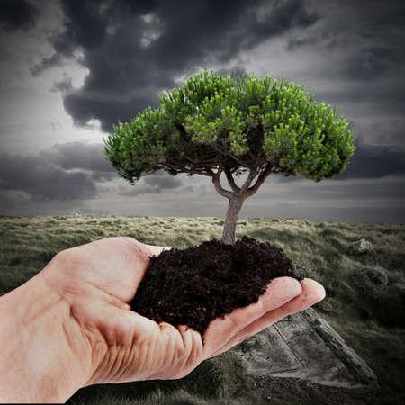 Herbebossing en duurzaam bosbeheer Stockfoto - 14777241