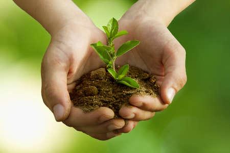 Jongen in het planten van bomen, behoud van het milieu Stockfoto - 14777123
