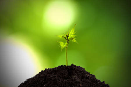sustainable development: young tree growing in the wild Stock Photo