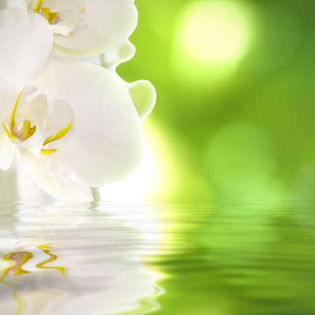 Achtergrond van natuurlijke spa met planten en reflectie in het water Stockfoto - 14777105