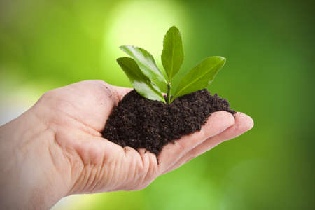 young tree to plant by man, Ecology and the Environment Stock Photo