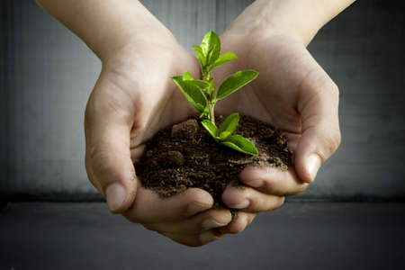 plant in the hands Stock Photo - 14846829