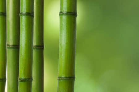 guadua: troncos de bamb�, decoraci�n de fondo spa Foto de archivo