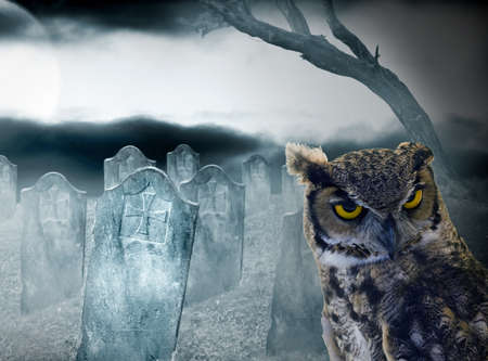 halloween owl in the cemetery at night with full moon photo