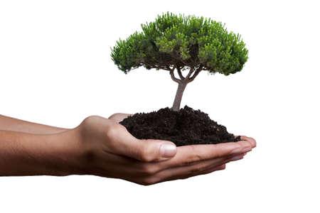 Ecologie concept van Stockfoto - 17067532