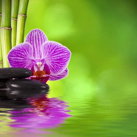 violet icon: spa decoration concept