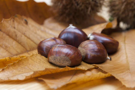 chestnuts Stock Photo - 17946673