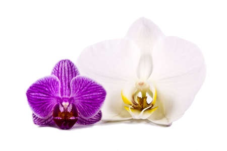 rubella: orchid isolated Stock Photo