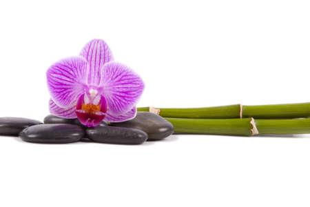 incommunicado: orchid isolated Stock Photo