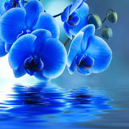 blauwe orchidee achtergrond met reflectie in het water