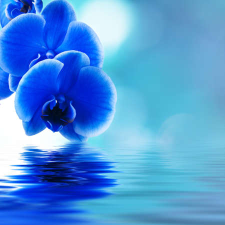 blue orchid background with reflection in water photo