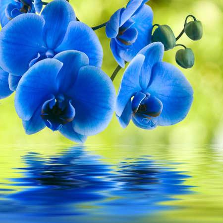 flores exoticas: fondo orqu?dea azul con reflejo en el agua