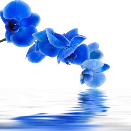 flores exoticas: fondo orquídea azul con reflejo en el agua
