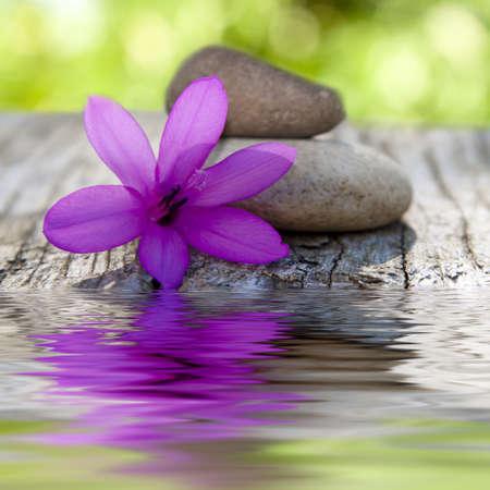 石と水の自然の花 写真素材