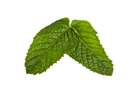 outbreaks: outbreaks of herbs for cooking isolated on white background, mint