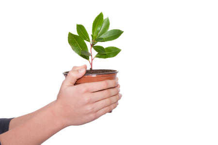 Hands of young woman with small tree in a container photo