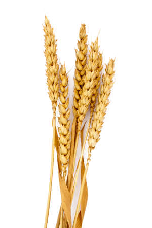 ear of wheat grain isolated on white background Banco de Imagens