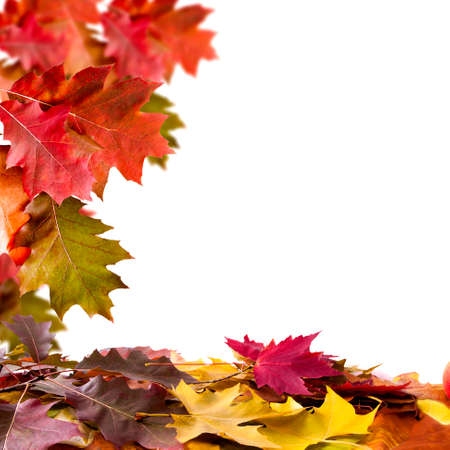 environmen: Nature background of autumn leaves, natural backgrounds