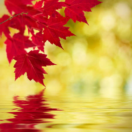 environmen: natural background of autumn leaves, natural backgrounds Stock Photo