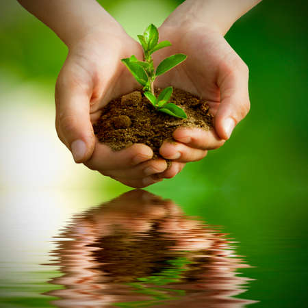 business support: sapling in hands with reflection in water Stock Photo