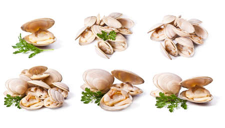 clams set isolated on white background Stock Photo
