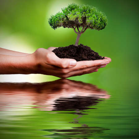 tree in hands with reflection in water Banque d'images