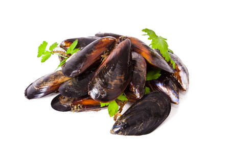 molluscs: mussels isolated Stock Photo