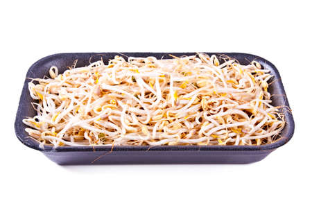 bean sprouts: fresh bean sprouts, soy Stock Photo