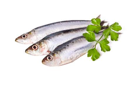 sardines: sardines isolated on white background Stock Photo