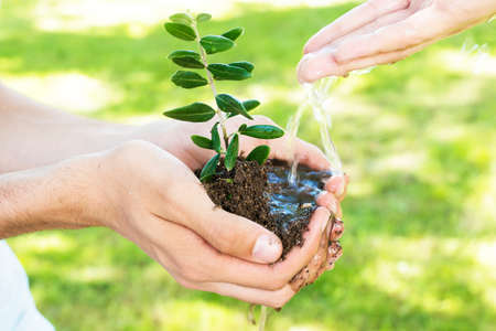 hands with young tree watering it for planting