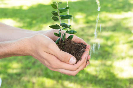 hand with sapling or young plant and irrigation water