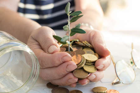 grandfathers hands with the savings and the plant growing Stock Photo
